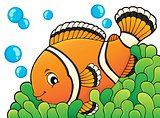 Clownfish topic image 3