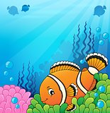 Clownfish topic image 4