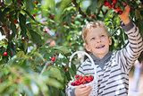 kid picking cherries