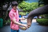 Young man feeds bananas of an elephant and it eats bananas.