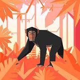 Flat geometric jungle background with Chimpanzee