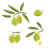 Icon of olives, Branch with green olives and leaves to decorate