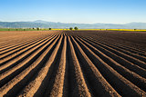 Potato field in the early spring after sowing - with furrows run