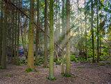 Sun peeping through trees during spring in gothenburg sweden