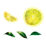 Lemon on white background. Watercolor illustration