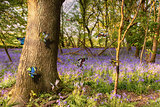 Butterflies in a blubell woodland