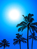 Palm trees silhouette over blue sunny sky