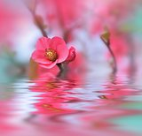Beautiful flowers reflected in the water, spa concept .Spa still life. Abstract macro photo .