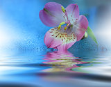Beautiful flowers reflected in the water, spa concept .Floral fantasy design.