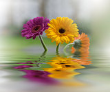 Beautiful flowers reflected in the water, spa concept .Spa still life.