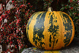 Large pumpkin with stripes, surrounded by fall berries