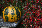 Green and orange striped pumpkin with bright red berries