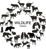 Collection of silhouettes of different species of wild animals