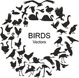 Collection of silhouettes of different species of birds
