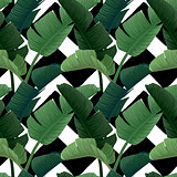 Hand drawn vector seamless pattern with green banana palm leaves on the zig zag striped geometric black and white background. Summer tropical print.