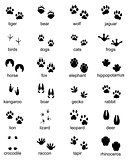 footprints of wild animals