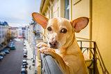 nosy watching dog
