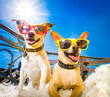 summer dogs balcony