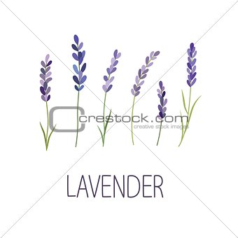 Lavender Flower. Designer for design, logo, lettering