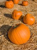Orange pumpkins sitting on hay in a pumpkin patch