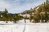 Snowshoers in Tamarack, Mammoth Lakes, CA