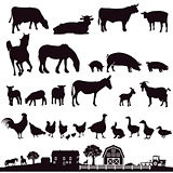 Farm animals and farm, illustration
