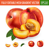Peach on white background. Vector illustration