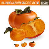 Persimmon on white background. Vector illustration