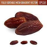 Date fruit, on white background. Vector illustration