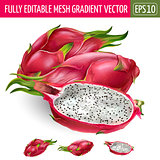 Dragon fruit on white background. Vector illustration