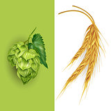 Hops and malt. Vector illustration