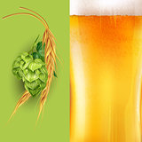 Hops, malt and beer. Vector illustration