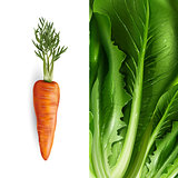 Carrot and lettuce. Vector illustration