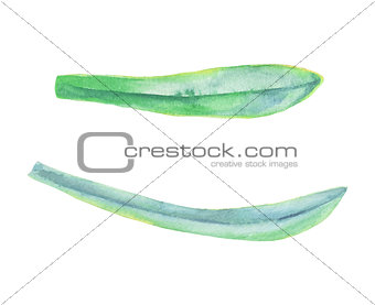 Watercolor green leaf plant decoration on white background