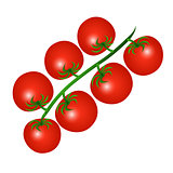 Vector illustration of a red cherry tomatoes on a branch isolate