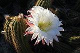 Scottsdale - Cacti of Arizona.