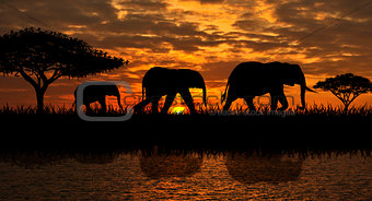 A family of elephants on a walk