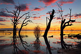 Old gnarly trees on the lake at sunset