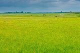 juicy green grass in a field, over a field of a cloud before a r