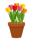 Spring Tulip Flowers in Flower Pot Vector Illustration
