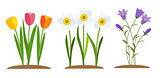 Spring Tulip, Bluebell, Narcissus  Flowers Background Vector Illustration