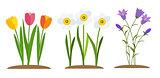 Spring Tulip, Bluebell, Narcissus  Flowers Background Vector Illustration