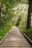 Boardwalk along Hiking Trail at Fort Clatsop