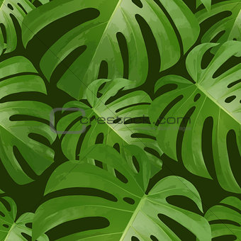 Background with tropical palm leaves. Exotic tropical plants.