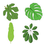Hand drawn tropical leaves set. Vector illustration.