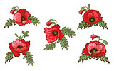 Set of hand drawn red poppies isolated on white background. Buds and flowers. Botanical vector. Floral elements for your design.