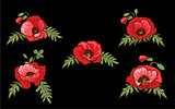 Set of hand drawn red poppies isolated on black background. Buds and flowers. Botanical vector. Floral elements for your design.