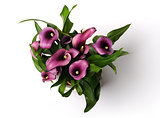 beautiful purple calla lilies