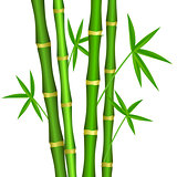 Green bamboo stems with leaves on a white background.