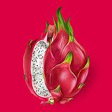 Dragon fruit. Vector illustration